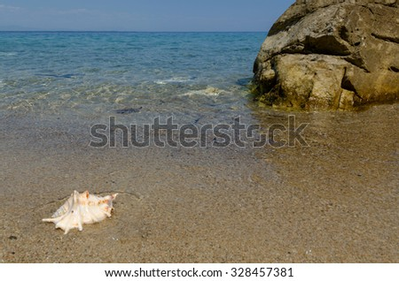 Sea shell in the sand. Big rock in the water