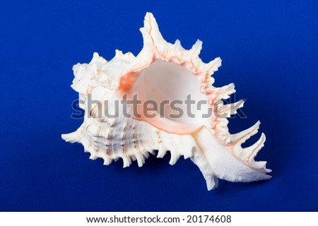 sea shell isolated on a blue background - stock photo