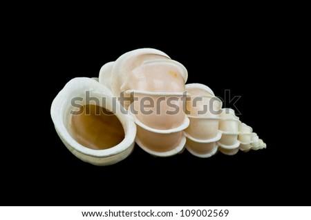 sea shell  isolated on black background - stock photo
