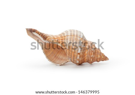 Sea shell, isolated on white background