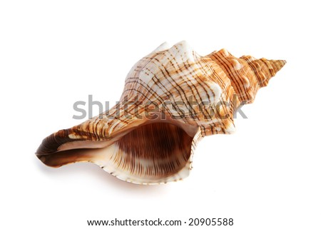 sea shell isolated on white background