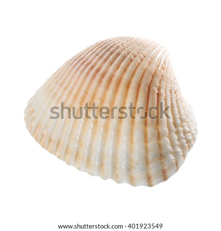 Sea shell isolated on white background. Close up - stock photo