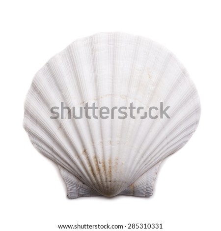 Sea shell isolated on white background. Top view