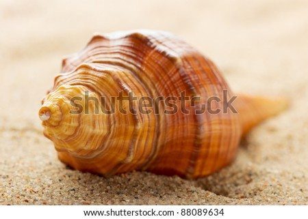 Sea shell lying on the pure yellow sand. Macro. Copy space. - stock photo