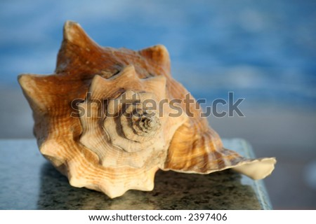 sea shell on a table over a water background, at sunset - stock photo
