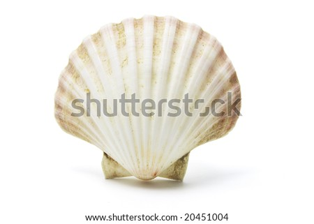 Sea Shell on Isolated White Background