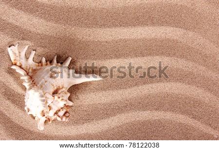 Sea shell on sand - stock photo
