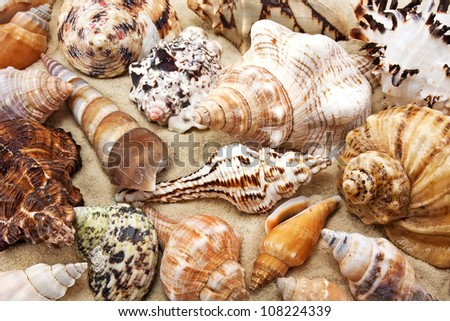 Sea shell on sand background - stock photo