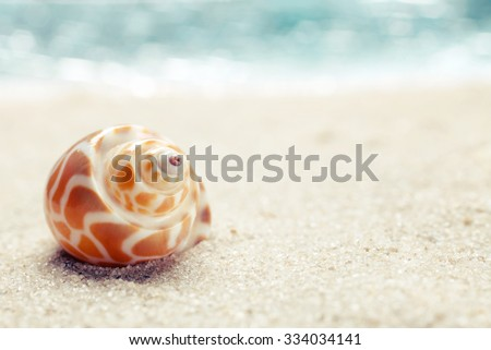 Sea shell on sand. Summer beach background. Top view - stock photo