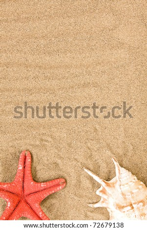 sea shell on the beach - stock photo