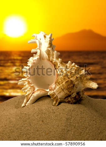 Sea shell on the beach with sunset - stock photo