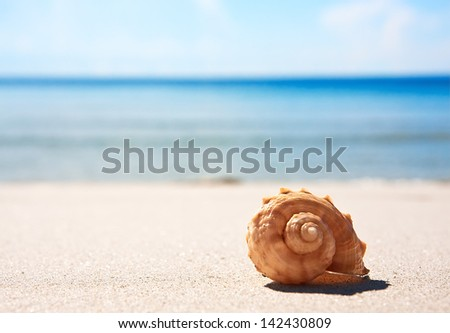 Sea shell on the sandy beach - stock photo