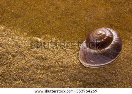 Sea shell on the sea sand at the water's edge. - stock photo