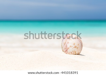 Sea shell on the white sandy beach - stock photo