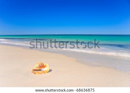 Sea shell on tropical beach - stock photo