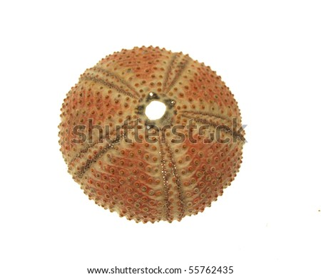 Sea shell on white background - stock photo