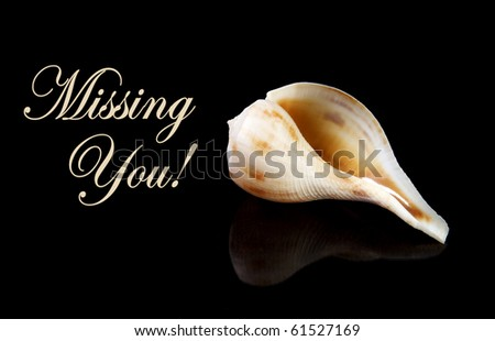 Sea shell with copy space and text which can be removed with 100 percent black - stock photo