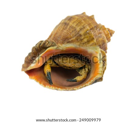 Sea shell with crab isolated on white background - stock photo