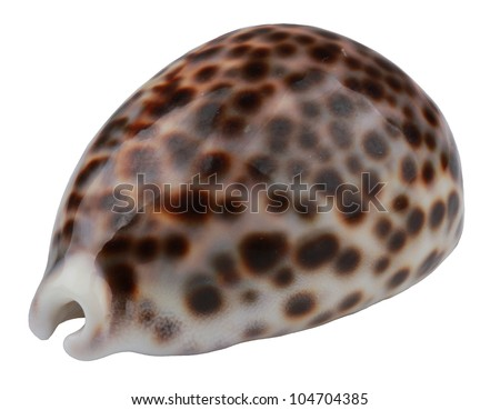 Sea Shell with dots isolated - stock photo