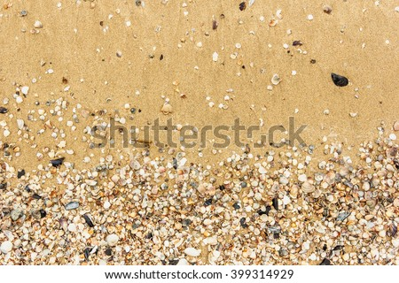 Sea shell with golden sand as background