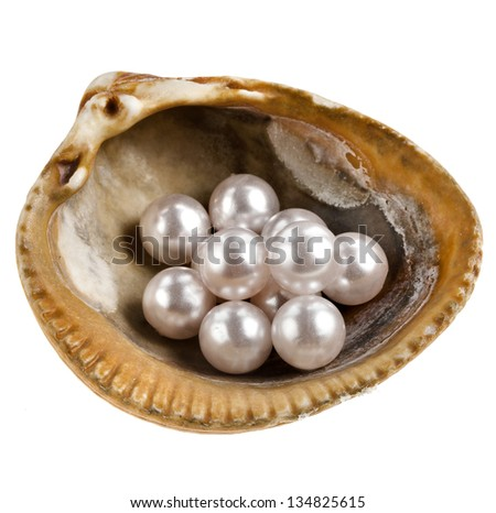 sea shell with lots pearls isolated on white background - stock photo
