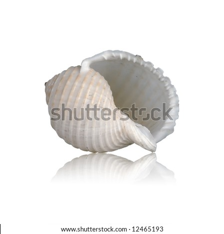 Sea shell with mirrored reflection against white background