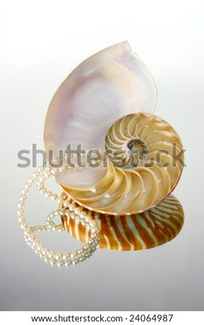 Sea shell with perl on mirror