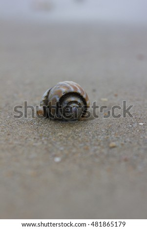 Sea shell with sand as background
