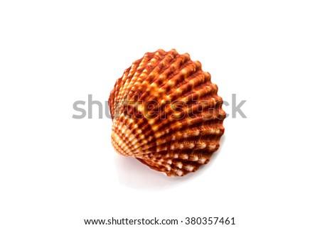 Sea shellfish isolated on white background - stock photo