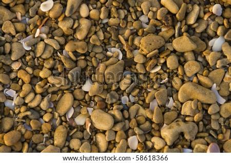 sea shells and pebbles - stock photo