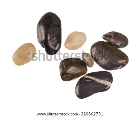 Sea shells and pebbles on white background