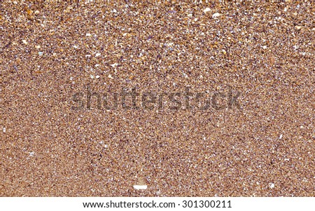 Sea shells and sand background - stock photo