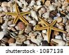 sea shells and sea stars - stock photo