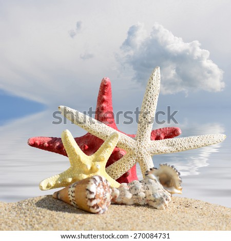 Sea shells and starfish with open envelope with blank letter on sand beach - stock photo