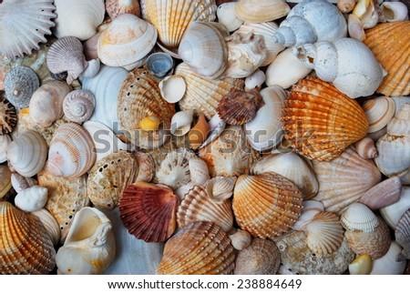 Sea shells as background - stock photo