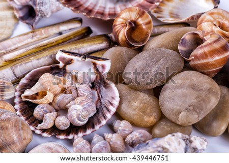 sea shells background on a white background