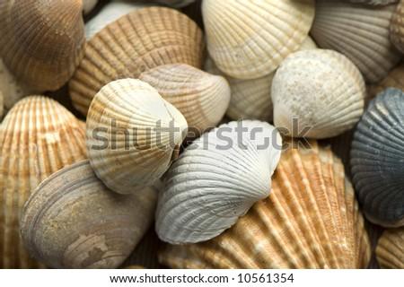 sea shells close up - stock photo