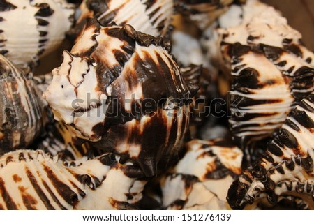 Sea Shells Closeup - stock photo