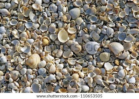 Sea shells. Coast. Beach - stock photo