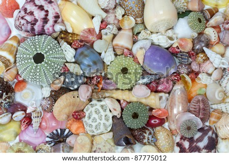 Sea shells collected on the coast of Costa Rica as background - stock photo