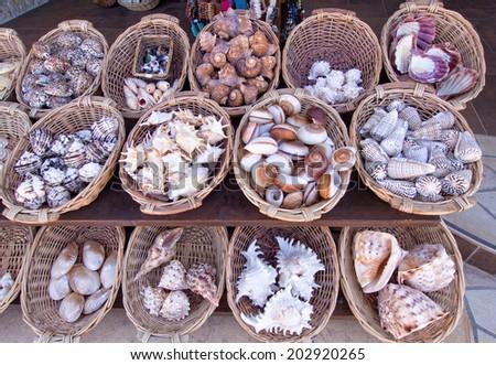 Sea shells for sale in a souvenir shop - stock photo