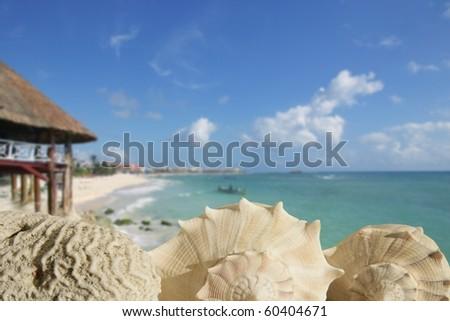 sea shells in Playa del Carmen Quintana Roo Mexico Riviera Maya [Photo Illustration] - stock photo