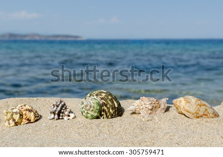 Sea shells in the sand close-up