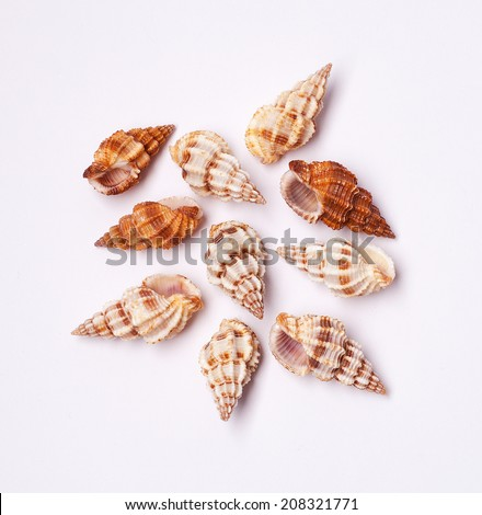 sea shells isolated - stock photo