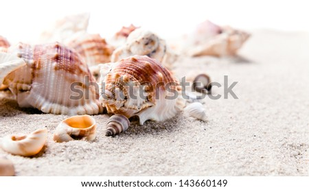 sea shells isolated on a white background - stock photo
