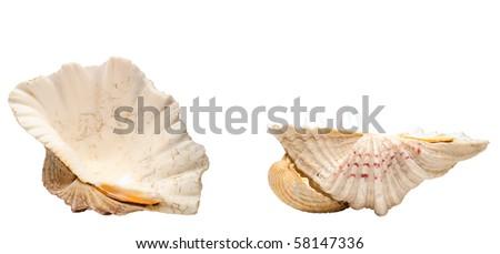 Sea shells isolated on white - stock photo