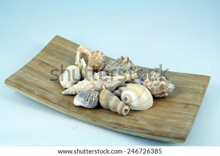 Sea shells on a wooden board. Sea shell decoration. - stock photo