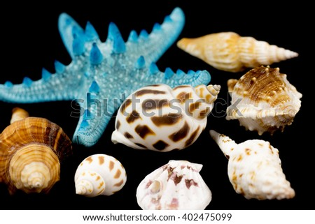 Sea shells on black background