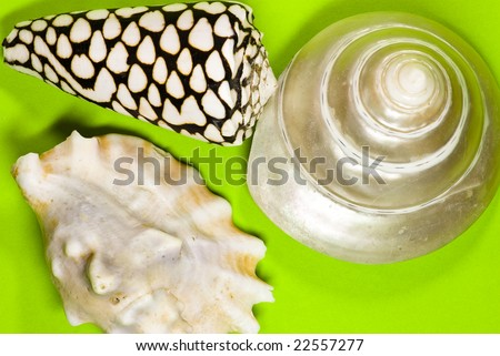 sea shells on green background