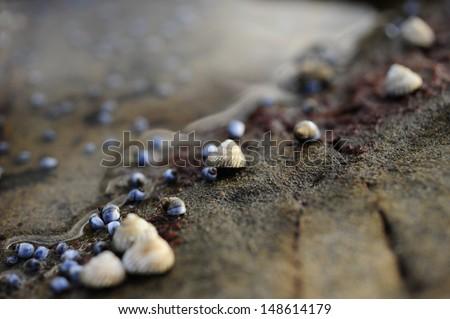Sea Shells on rocks close up macro shot - stock photo
